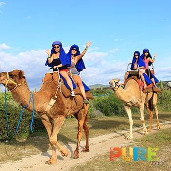 Cabo Camel Tour