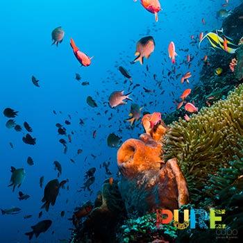 Cabo Pulmo Scuba Diving Tours