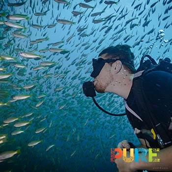 Cabo Scuba Diving Tours