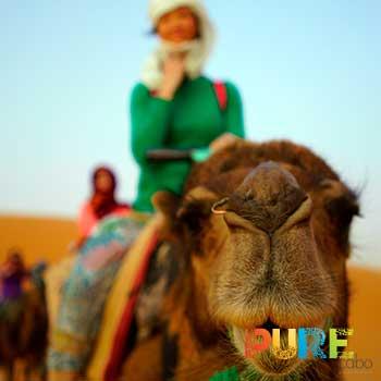 Cabo Camel Rides