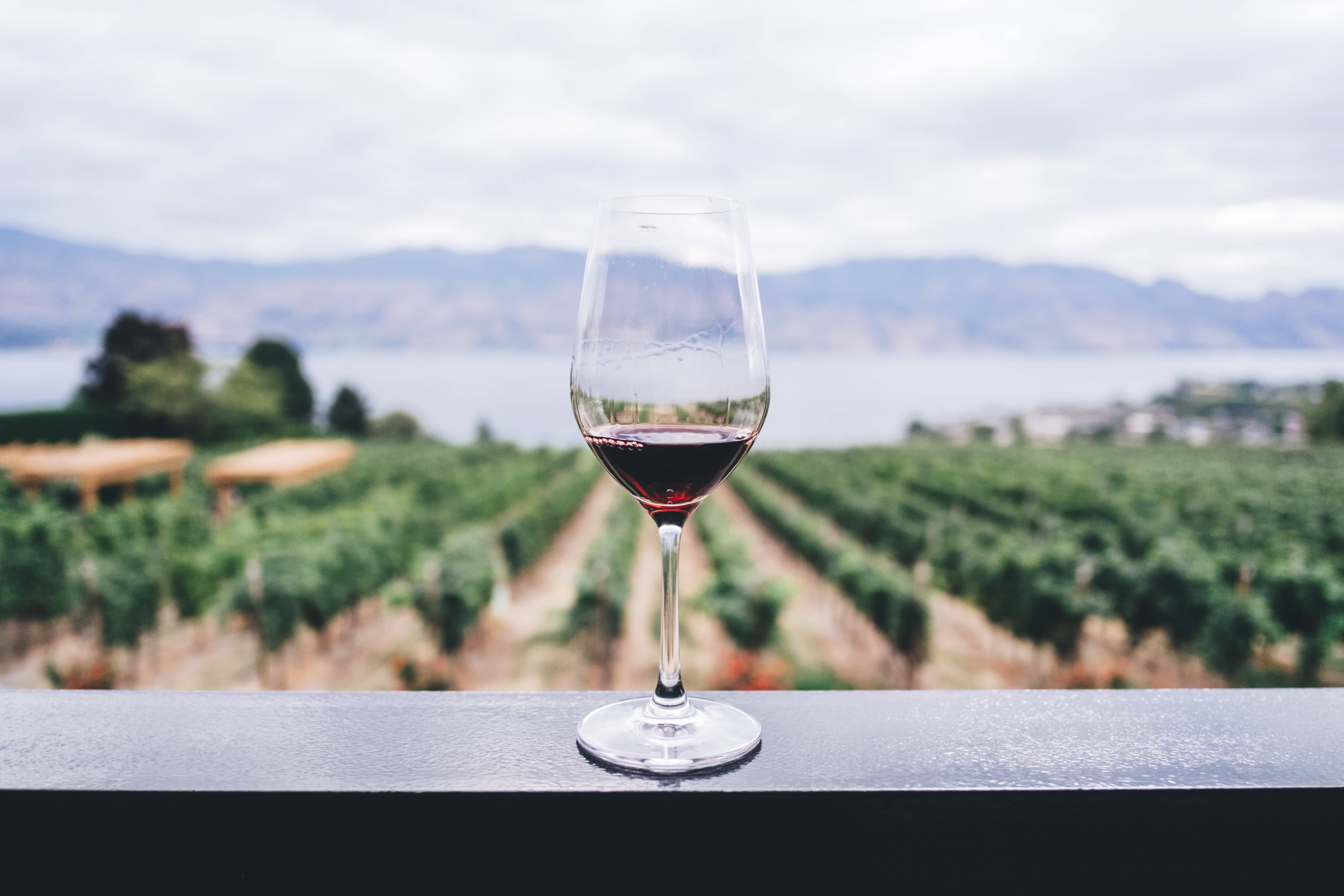 Baja California Wine Tasting